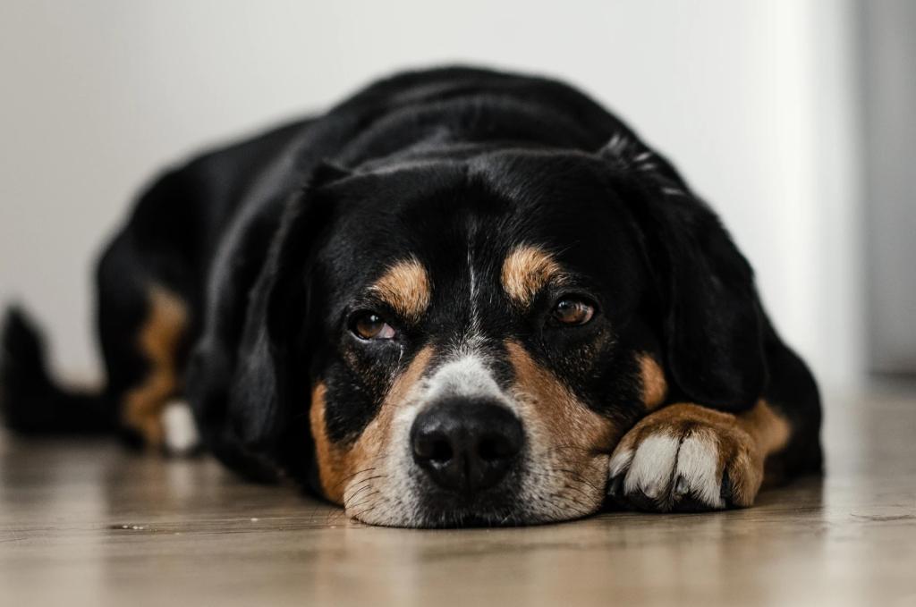 Cachorro preto e caramelo deitado olhando para o lado