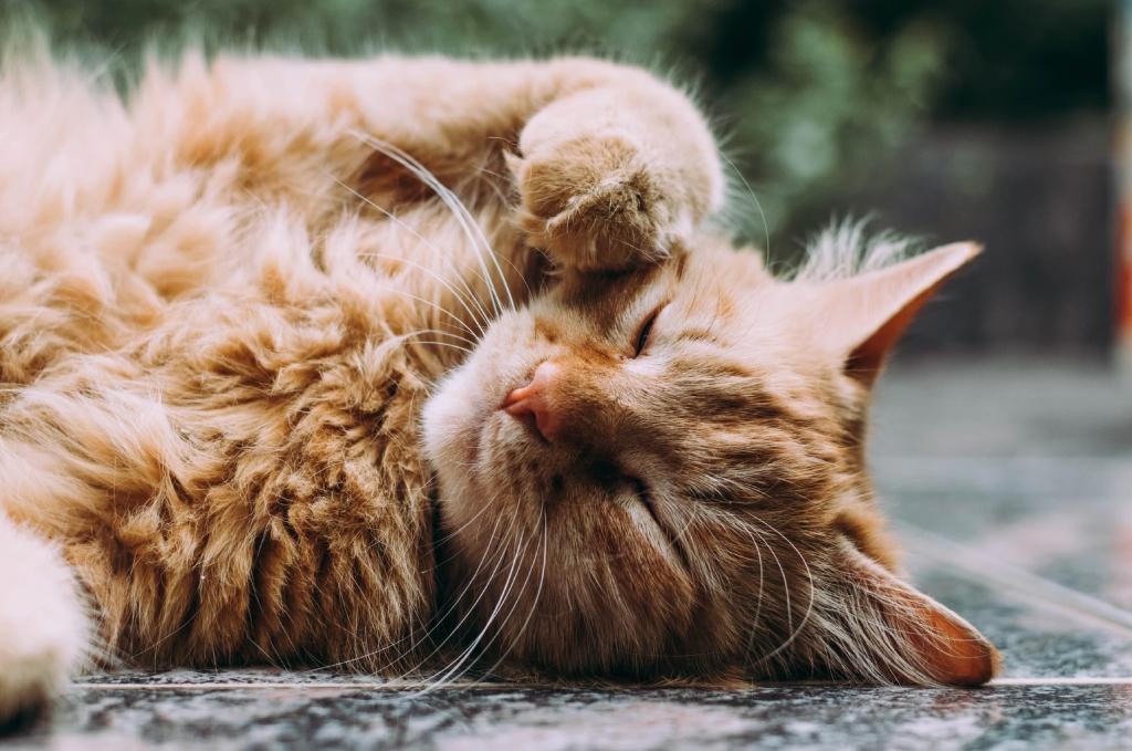 Gato laranja deitado na calçada